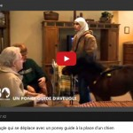 Cheval guide d'aveugle, 30 Millions d'amis