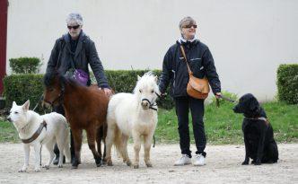 Quintette : Chiens et mini-chevaux guides d'aveugles