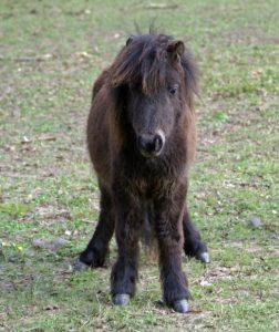 Mini cheval 5
