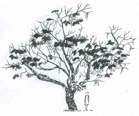 Dessin silhouette Catalpa