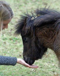 L'Homme et le mini cheval