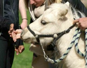 Main enfant sourdaveugle vers mini cheval