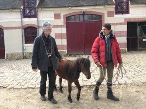 Quintette mini cheval guide d'aveugle