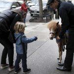 Un mini-cheval pour aider les personnes hospitalisees