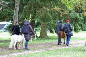 Guidages mini chevaux